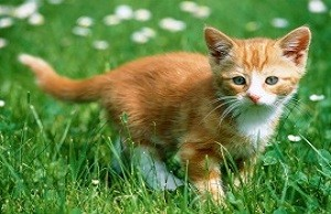 kitten_in_the_grass-t2